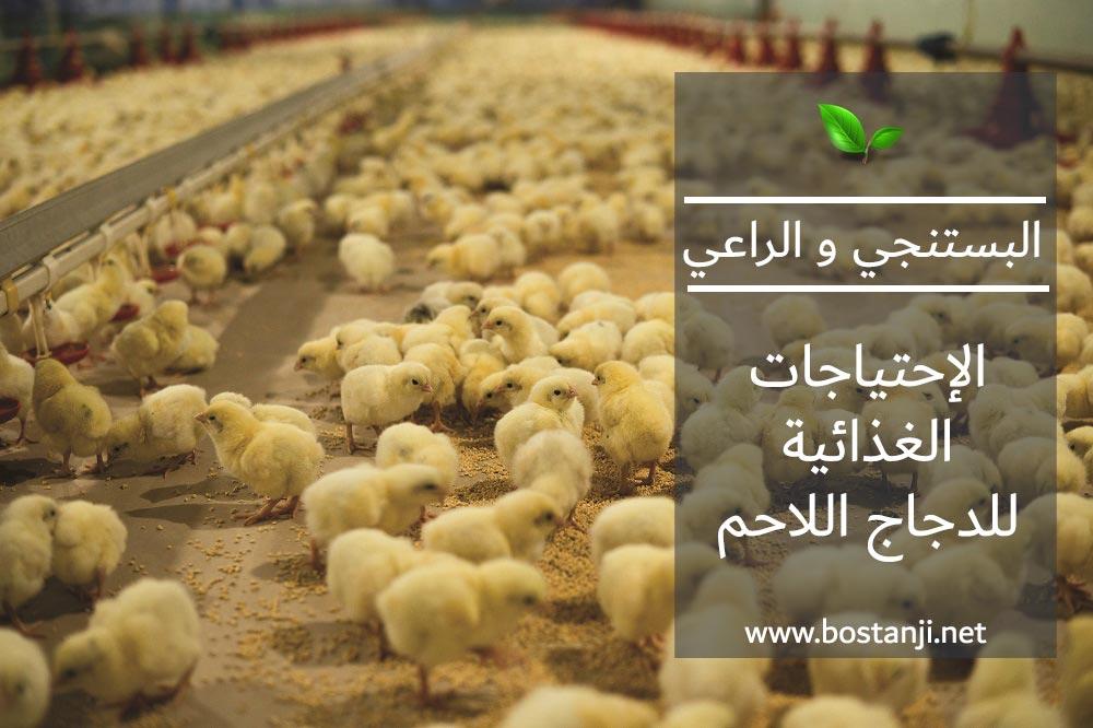 الإحتياجات الغذائية للدجاج اللاحم