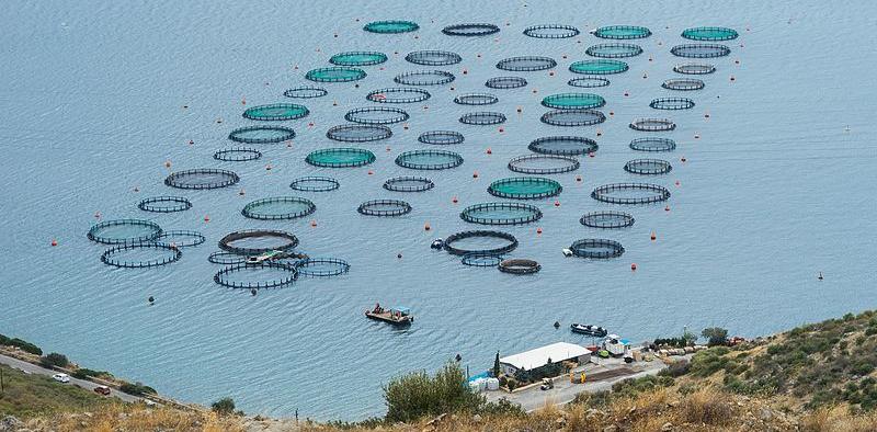 كيف يمكنني البدء في مزرعة الأسماك؟