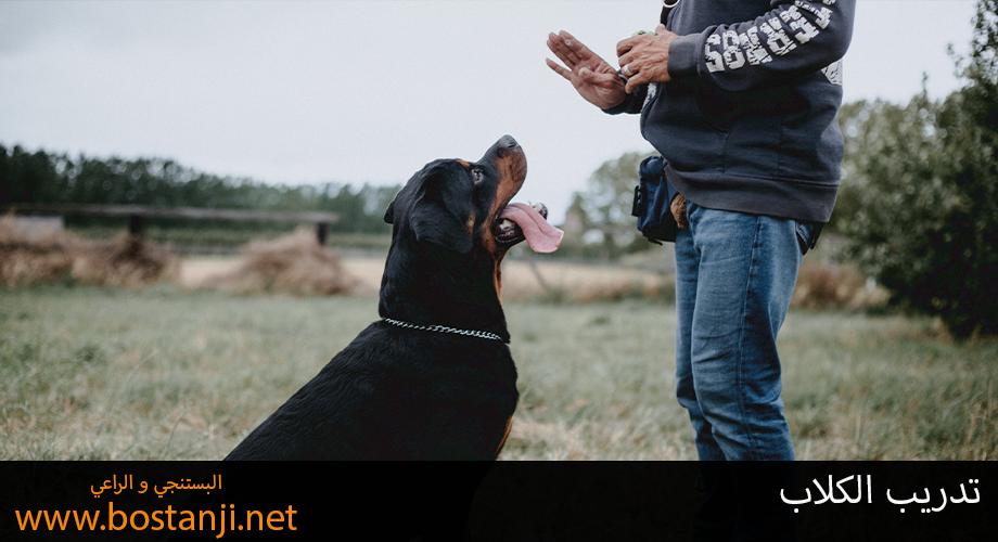 تدريب الكلاب