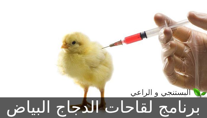 برنامج لقاحات الدجاج البياض
