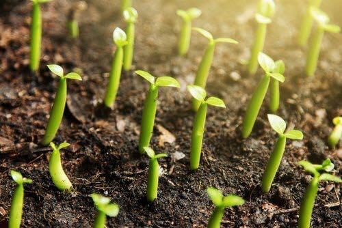 إستخدام القرفة كسماد للنباتات